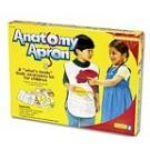 Delantal anatomía